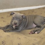 duce and lady pups 006