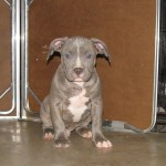 duce and lady pups 025
