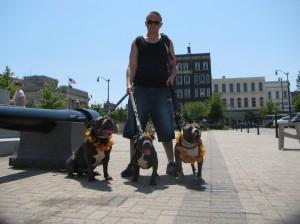 # pitbulls walking