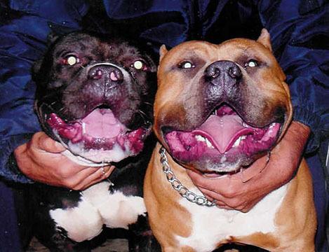 Bloosom page ma & pa  Remy & big girl